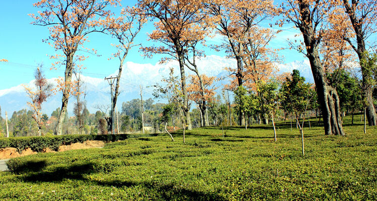 Palampur – The Bewildering Beauty