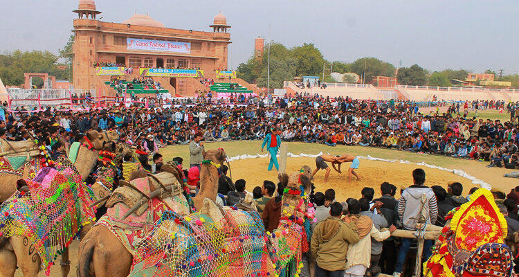 6 Reasons Why You Should Attend The Camel Festival In Bikaner?