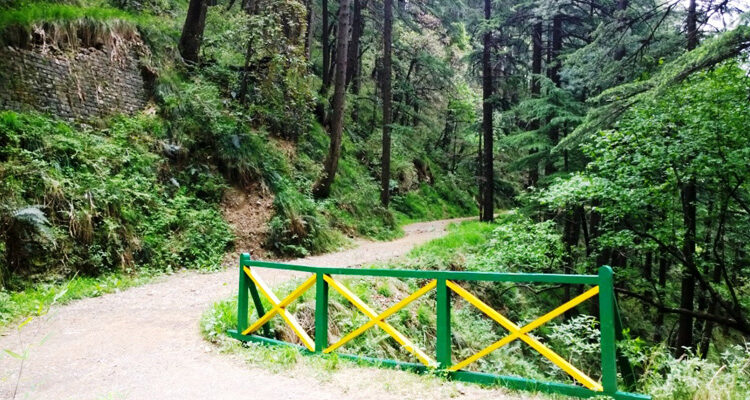 Shimla Walking Trails