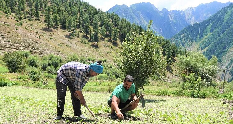 Fusing Himachal's Natural Farming Mission to Agro-Ecotourism